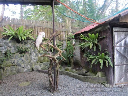 Kinder Zoo Adventure Jungle, Tagaytay