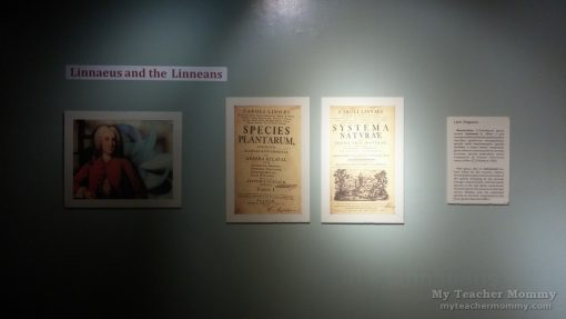 linnaeus_linnaeans_exhibit_museum_filipino_people_13