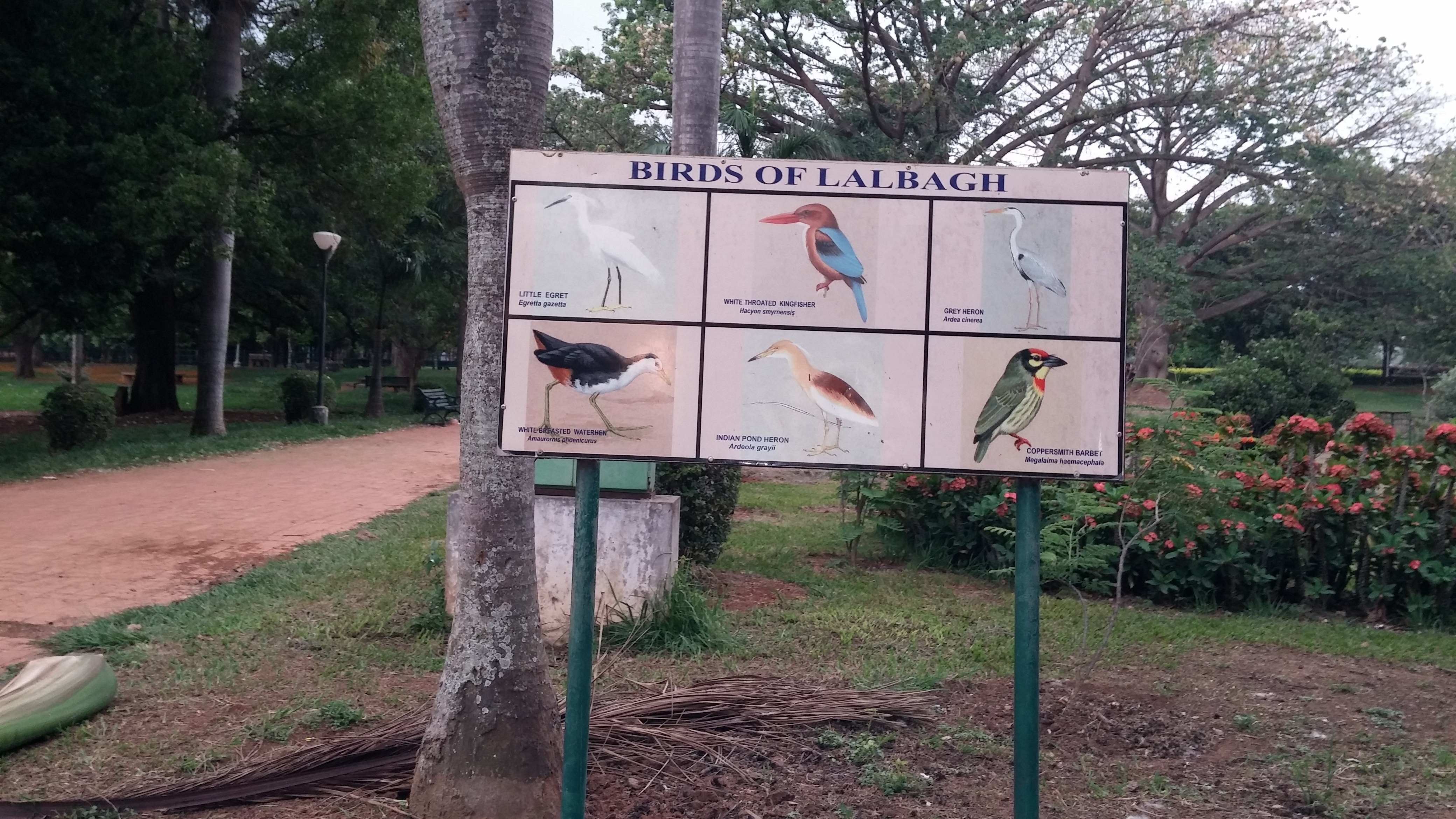 Poster of birds in Lal Bagh Botanical Garden, Bangalore