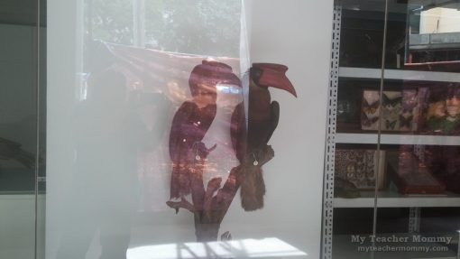 taxidermy_museum_of_the_filipino_people_01