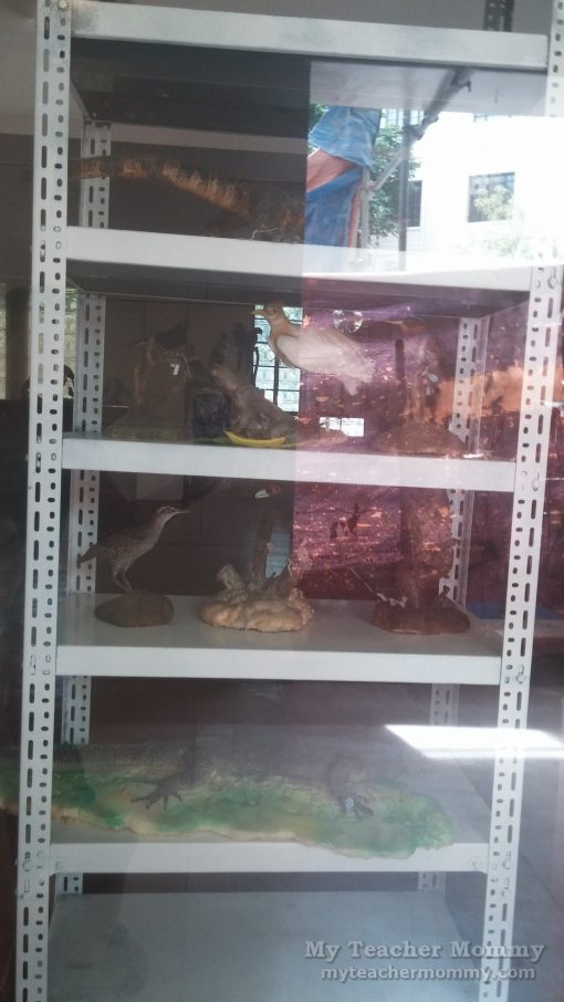 taxidermy_museum_of_the_filipino_people_02